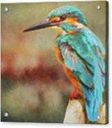Kingfisher's Perch Acrylic Print