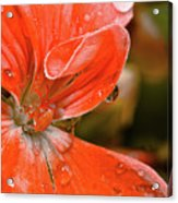 Kissed By The Rain Acrylic Print