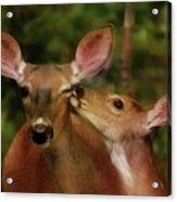 Kisses For Mom Acrylic Print