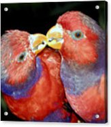 Kissing Birds Acrylic Print