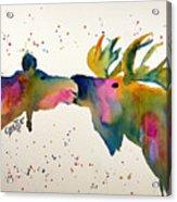 Kissing Moose Acrylic Print