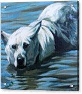 Kita Swimming The Platte Acrylic Print