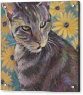 Kit Cat Acrylic Print