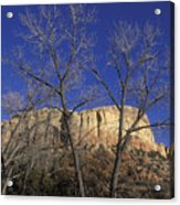 Kitchen Mesa And Bare Cottonwood Trees Acrylic Print