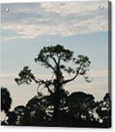 Kite In The Tree Acrylic Print
