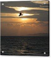 Kite Sunset Acrylic Print