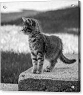 Kitten 2 Acrylic Print