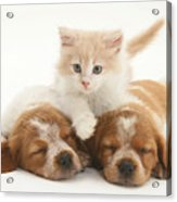 Kitten And Puppies Acrylic Print by Jane Burton