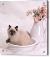 Kitten Bath Acrylic Print by Crystal Garner