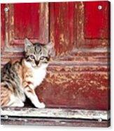 Kitten By Red Door Acrylic Print