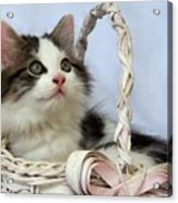 Kitten In Basket Acrylic Print