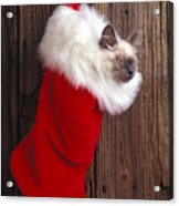 Kitten In Stocking Acrylic Print by Garry Gay
