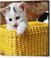 Kitten In Yellow Basket Acrylic Print by Garry Gay