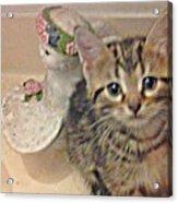 Kitten Love Acrylic Print