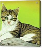 Kitten On Rock Acrylic Print