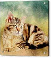 Kitten - Painting Acrylic Print