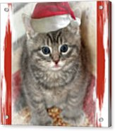 Kitten Playing Santa  Acrylic Print