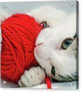 Kitten Playing With Red Ball Of Yarn Acrylic Print