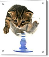 Kitten Sits In A Glass  Acrylic Print