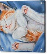 Kitten Sleeping Acrylic Print