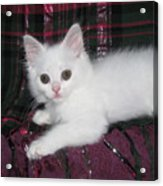 Kitten Snow White On Green And Pink Plaid Acrylic Print