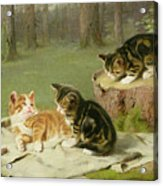 Kittens Playing Acrylic Print by Ewald Honnef