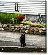 Kitty Across The Street  Acrylic Print