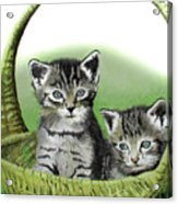 Kitty Caddy Acrylic Print