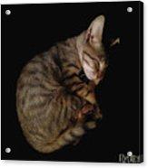 Kitty Cat Curls Up Acrylic Print