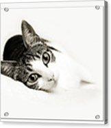 Kitty Cat Greeting Card Congratulations Acrylic Print