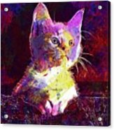 Kitty Cat Kitten Pet Animal Cute  Acrylic Print