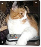 Kitty Control Acrylic Print