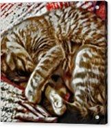 Kitty Dreams Acrylic Print