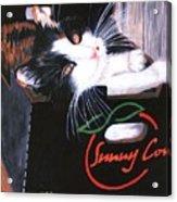 Kitty In A Box Acrylic Print