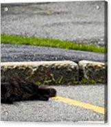 Kitty In The Street Acrylic Print