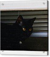 Kitty In The Window 2 Acrylic Print