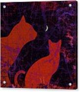 Kitty Kitty Acrylic Print