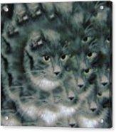 Kitty Portrait  Acrylic Print