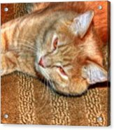 Kitty Relaxing Acrylic Print