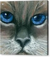 Kitty Starry Eyes Acrylic Print