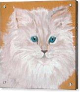 Kitty White Acrylic Print