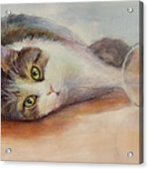 Kitty With Spilled Milk Acrylic Print