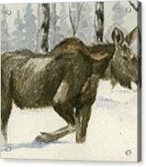 Knee Deep In Snow Acrylic Print