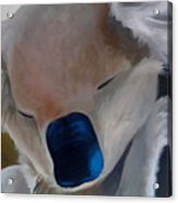 Koala Detail Acrylic Print