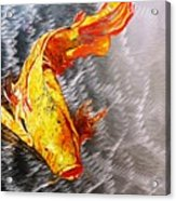 Koi Fish Aluminum Print, Unique Gift For Any Home Or Office. 'the Silver Koi'. Acrylic Print
