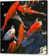 Koi Fish II Acrylic Print