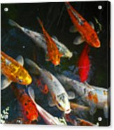 Koi Fish IIi Acrylic Print