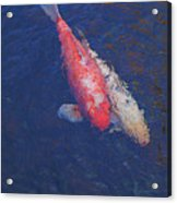 Koi Fish Partners Acrylic Print