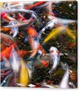 Koi Fish Pond Abstract Acrylic Print