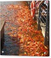 Koi Fishes In Feeding Frenzy Part Two Acrylic Print